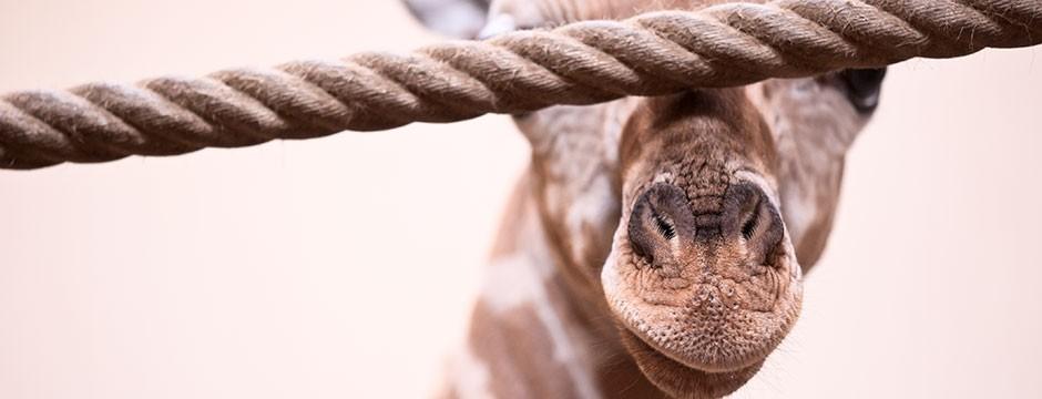 Giraff av Bodil LIndholm